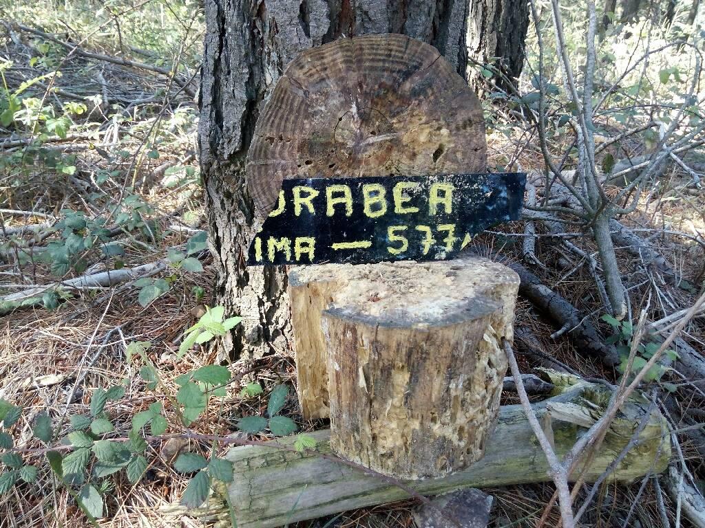 Amaia Zabala erabiltzailea Gorabea puntan, 2017-05-07 20:58