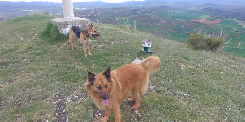 MIKEL ARRIBAS erabiltzailea Cerro puntan, 2019-04-24 09:59