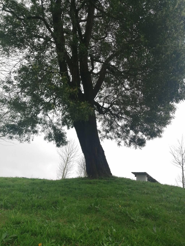 Ainhoa Marcide erabiltzailea Zarandona / Pikotamendi puntan, 2021-02-26 09:45