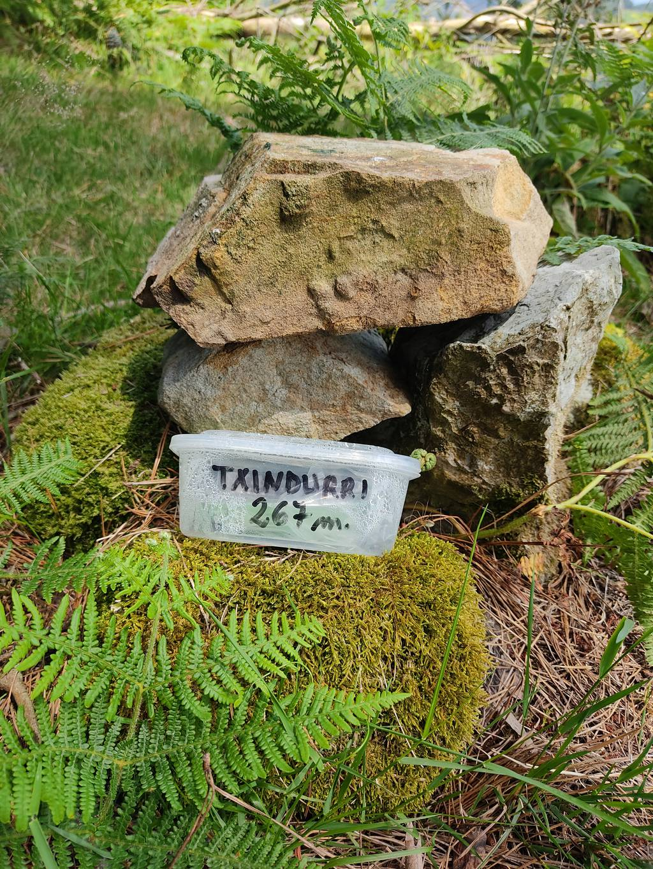 A_Errasti erabiltzailea Txindurri puntan, 2021-07-03 13:32